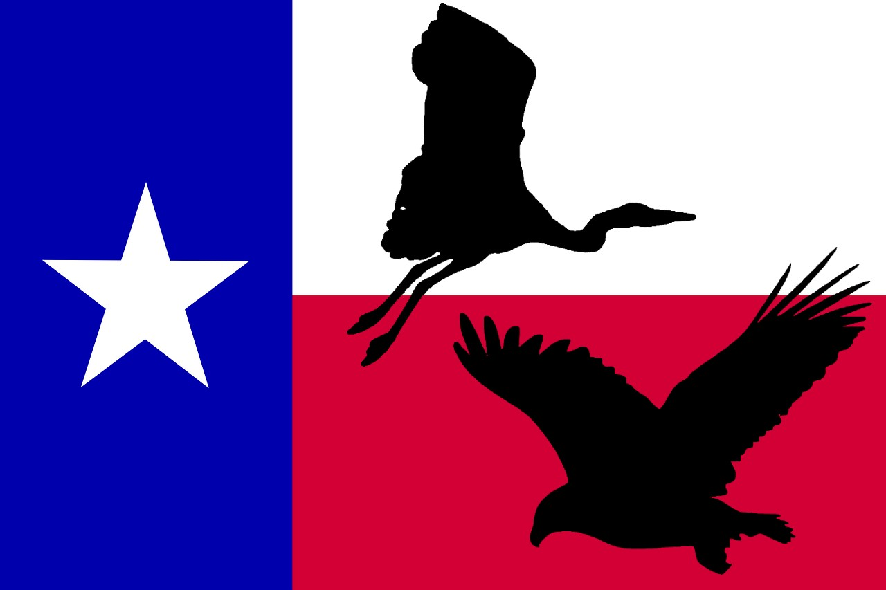 What's the Largest Bird in Texas?