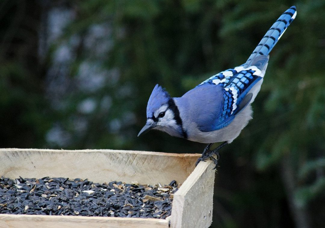 What Time are Birds Most Active at Feeders?