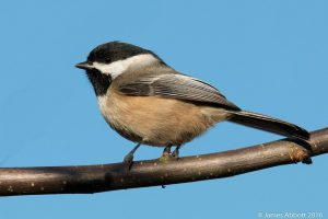 How to Attract Birds Without Using Feeders