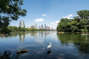 The Top 5 Bird Watching Hotspots in Austin (and How to Bird Them)