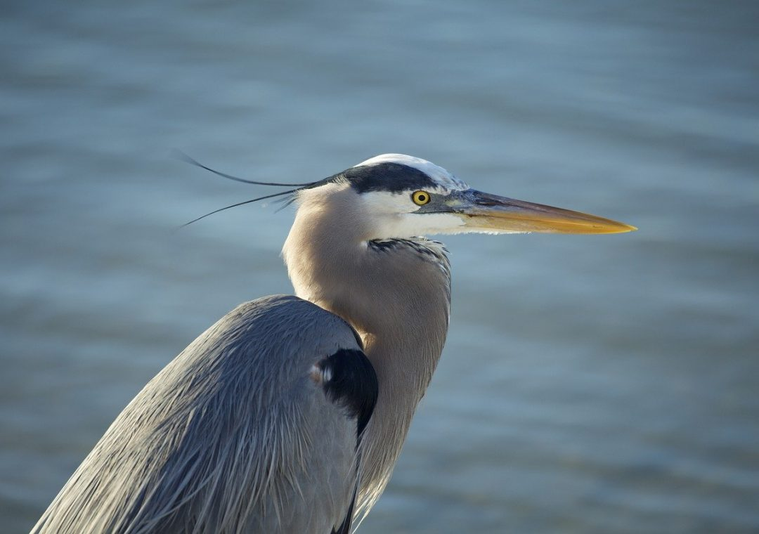 Texas Herons & Egrets: How to Tell Them Apart (with photos)